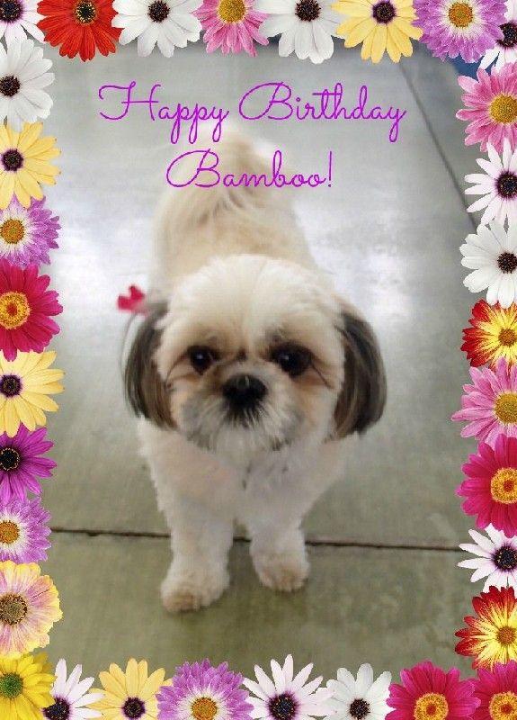 Bamboo's Birthday!