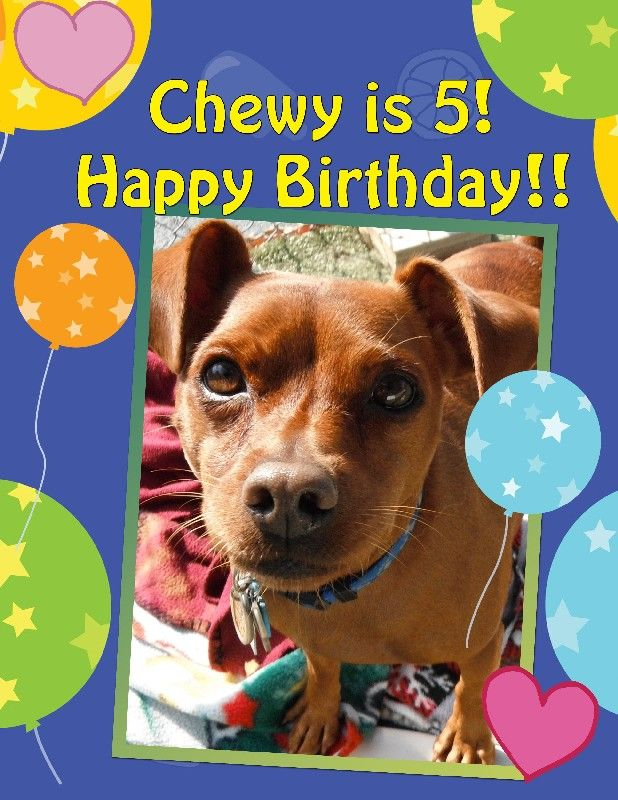 Chewy turns 5!