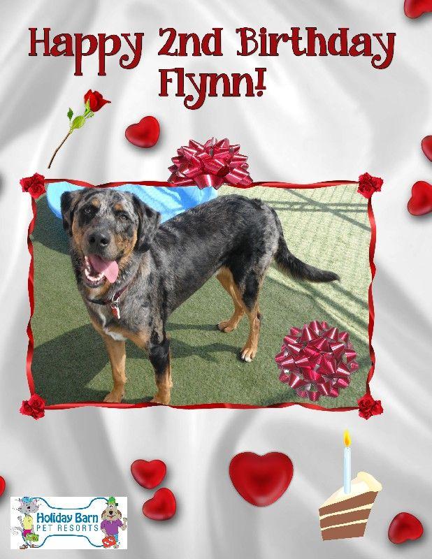Flynn's Birthday!