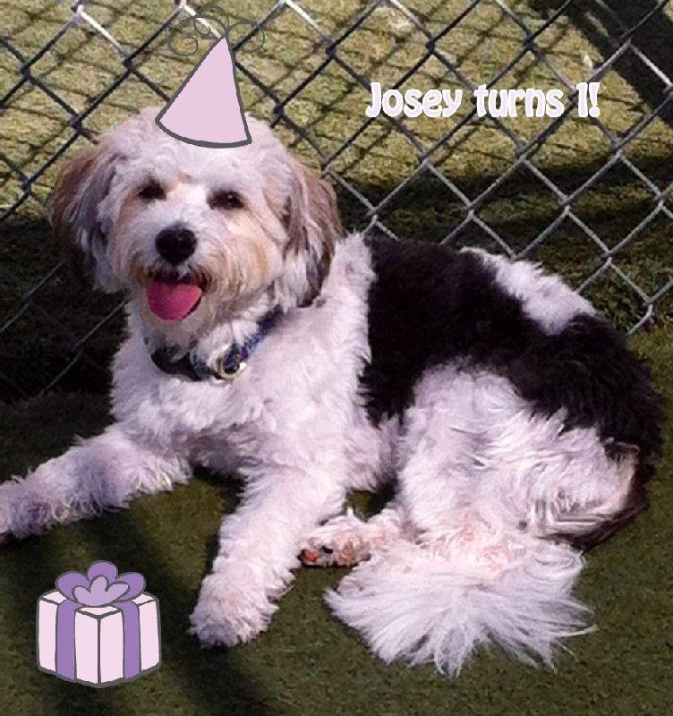 Josey's Birthday!