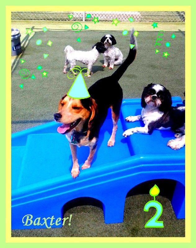 Baxter Turn's 2!