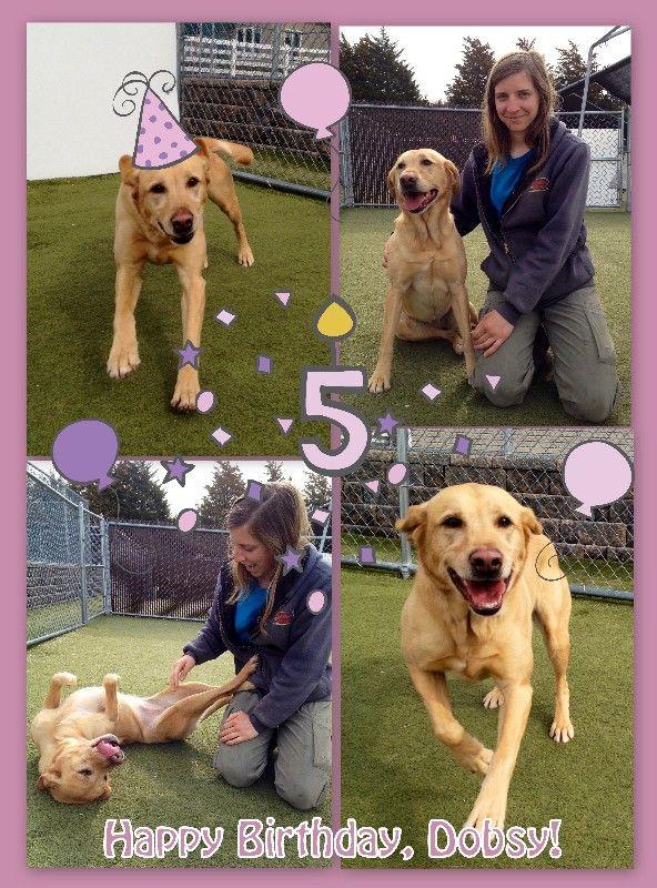Dobsy's 5th Birthday!