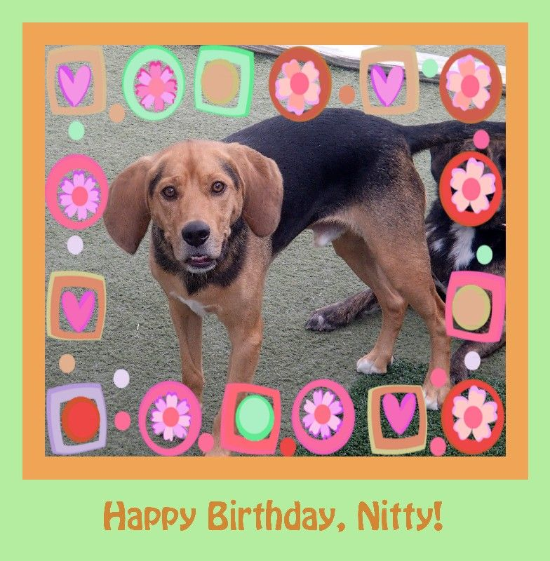 Nitty's Birthday!