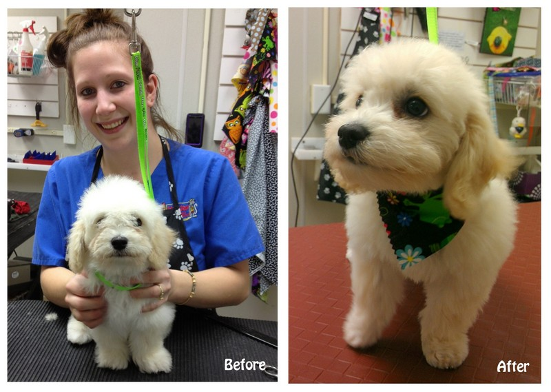 Layla's Before and After pictures!