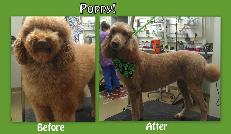 Poppy's Before and After Pictures!