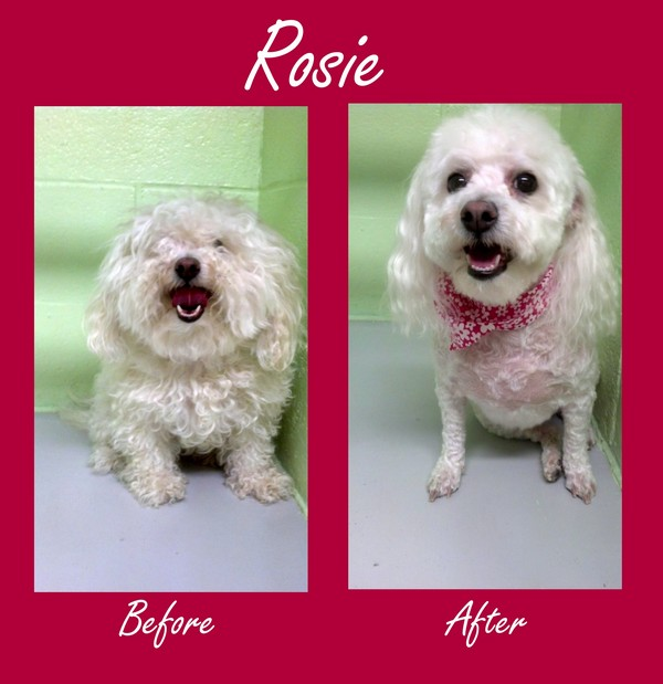 Rosie's Before and After Pictures!