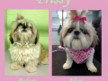 Prissy's Before and After Pictures!