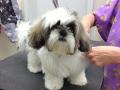 Winston getting a hair cut!