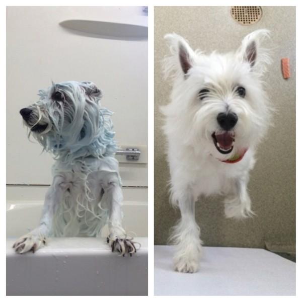 Yuki gets a whitening treatment!