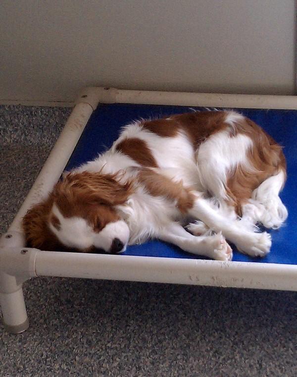 Shhh.... Cooper is sleeping!
