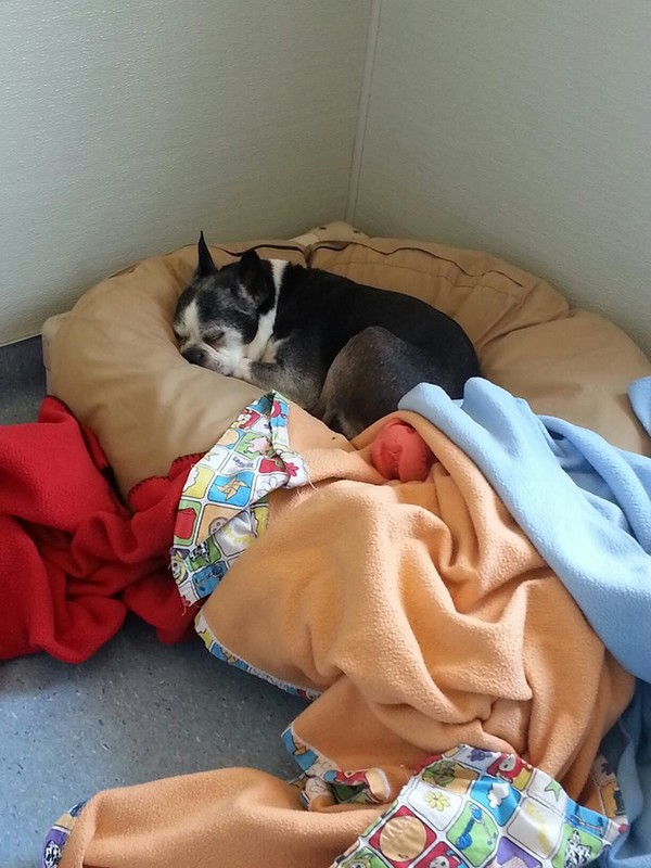 Daisy sure looks comfortable!