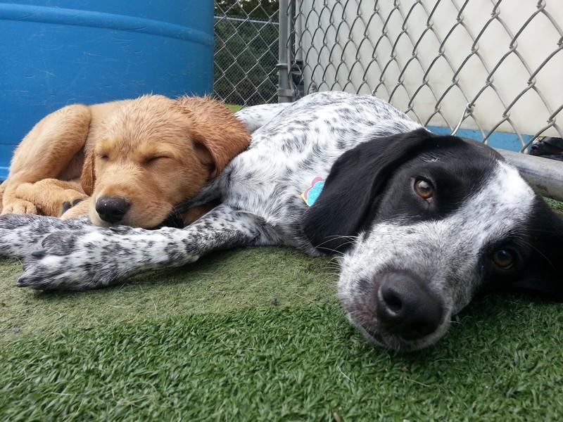 Camp napping buddies!