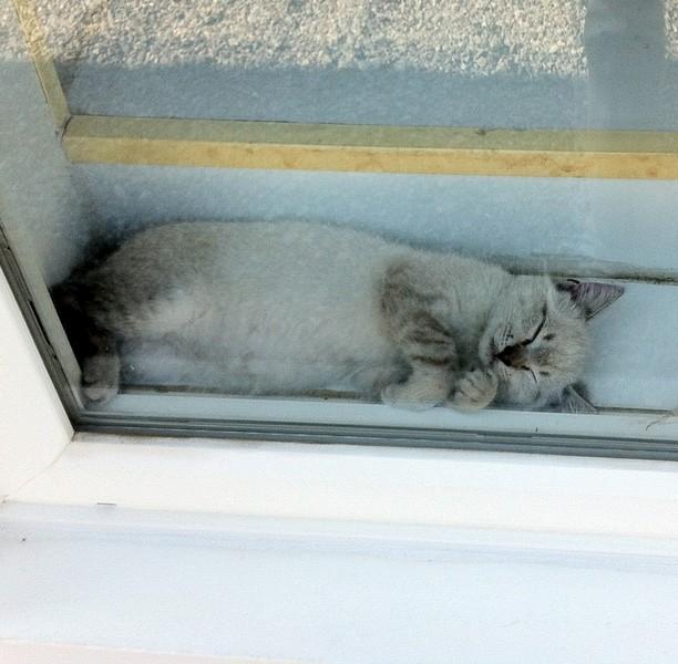 Kitten Little decides to sleep in her window!