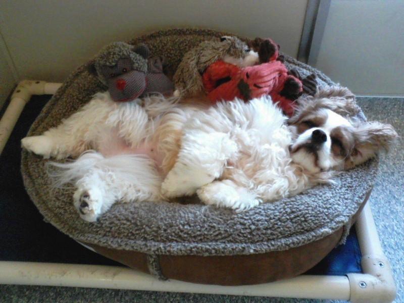 Rocky is sleeping-in!
