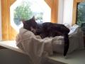 Freddie takes a nap!
