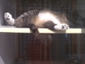 Zonked-out kitty in the window!