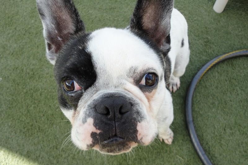 Cute face Bennie!