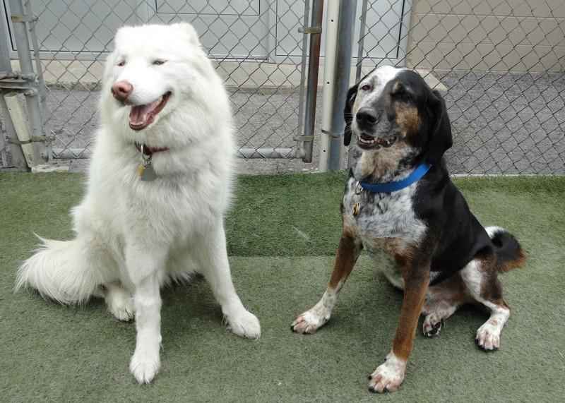 Best friends, Bianco & Callahan!