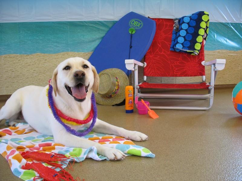 Camper's Beach Party!