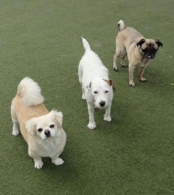 Lindsay, Ella, and Pepper!