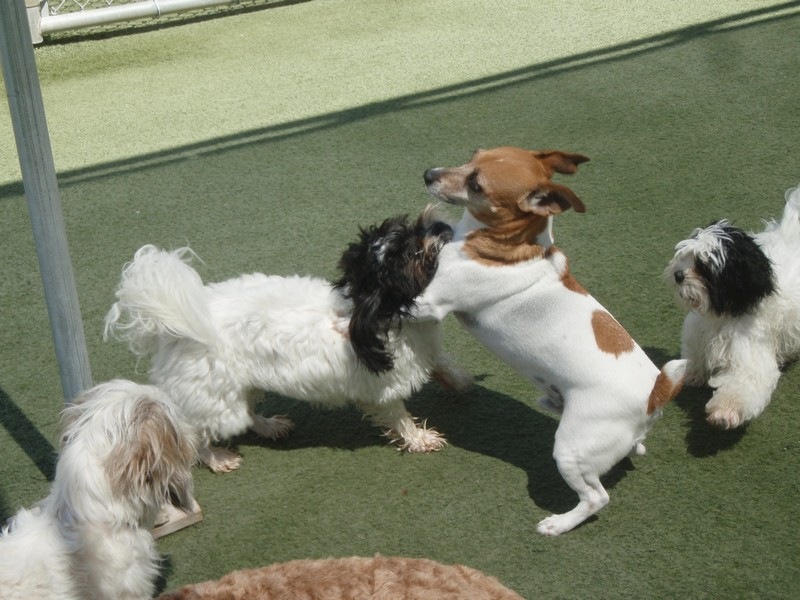 Small dogs at play!