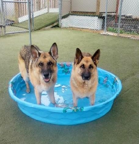 Casey & Eza stay cool in the baby pool!