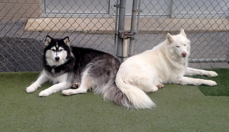 BFF's Iceis and Bianco!