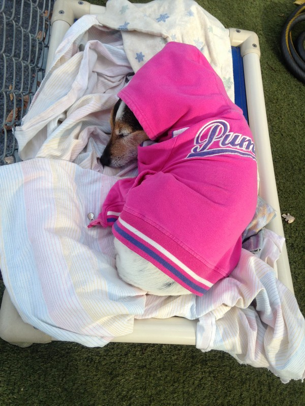 Pepper curls up in a coat and takes a nap!