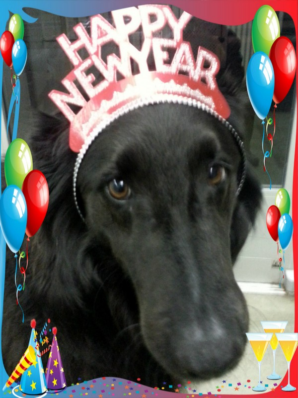 Camper's New Year's eve party!