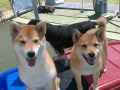 Nala & Chessie have pretty smiles!