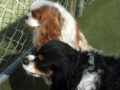 Bailey and Scout - Friendship Day