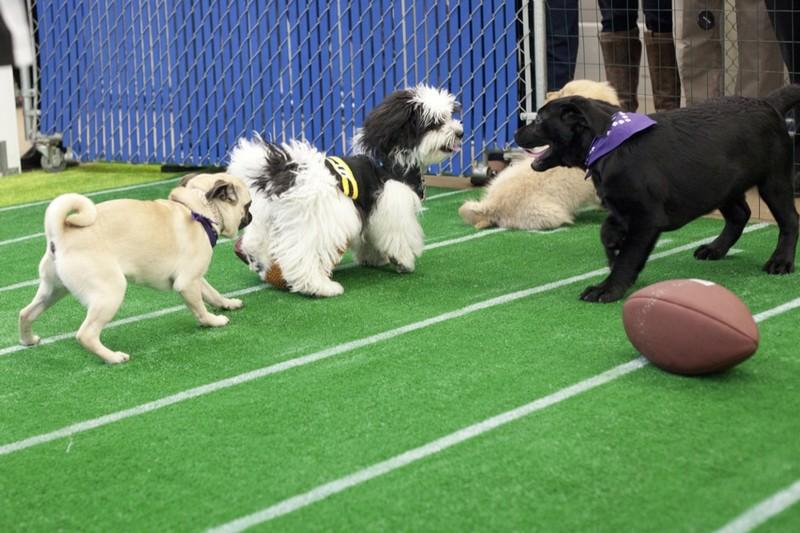 Puppy Bowl!