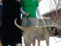 Melanie and Bogart at 2014 SPCA Dog Jog!