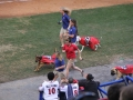 Trainers and pack take to the field at Bark in the Park!