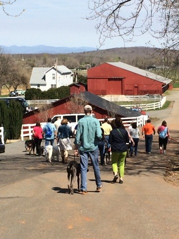 Barboursville pack walk!