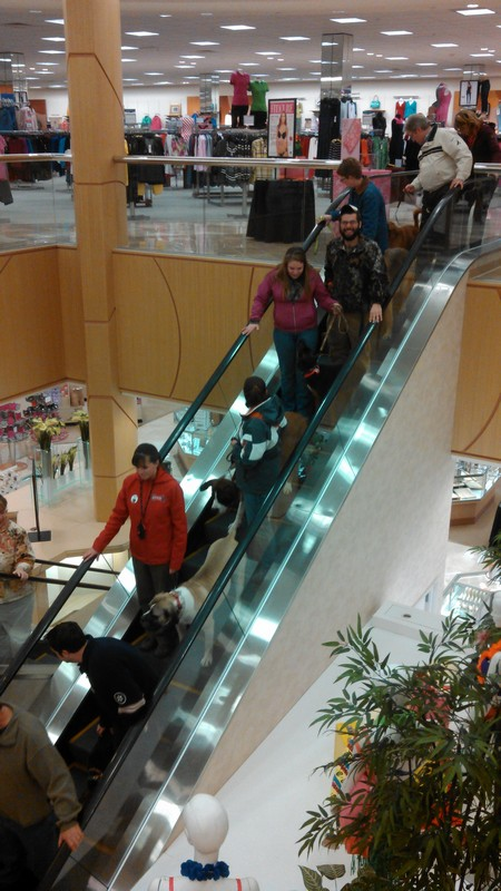 Mastering the escalator!