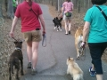 Deep Run Park pack walk!