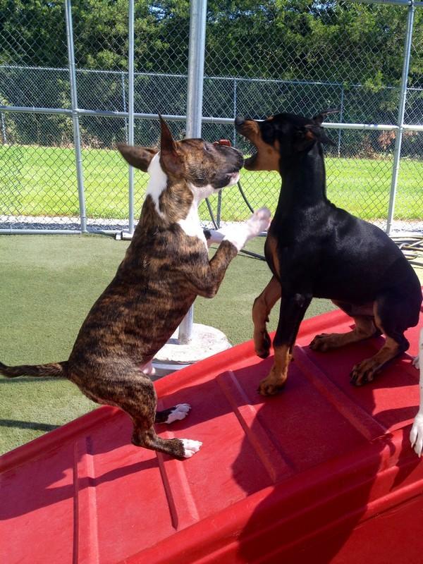 Puppies at play!