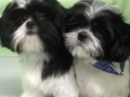 Seeing double cuties!