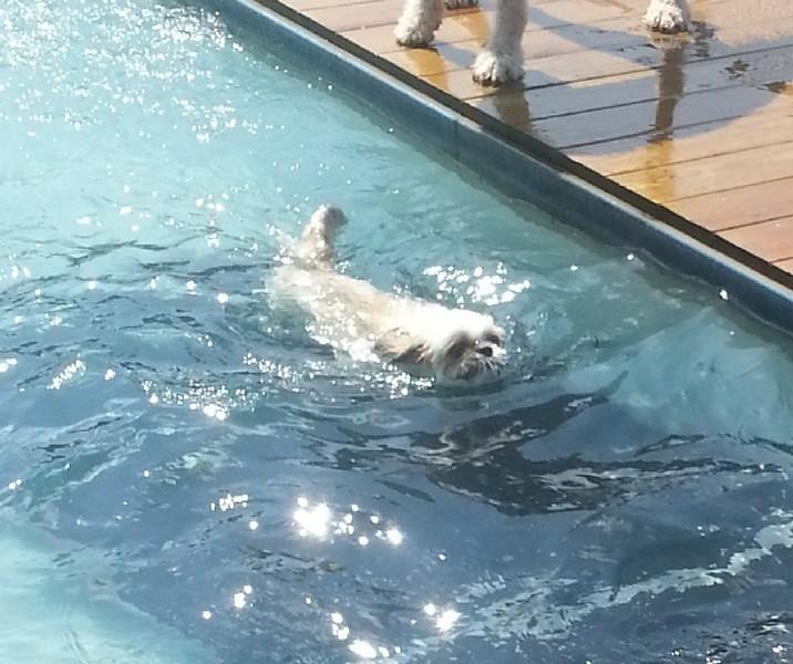 A refreshing swim!