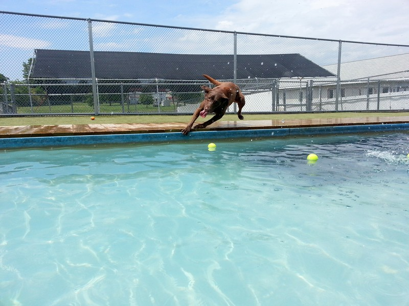 Annie dives for the ball!