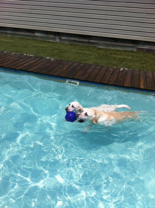 Bella captures her prize!