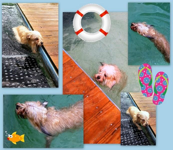 Phoenix's first swim!
