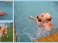Lola loves swimming!