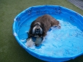 Ripley loves the baby pool!