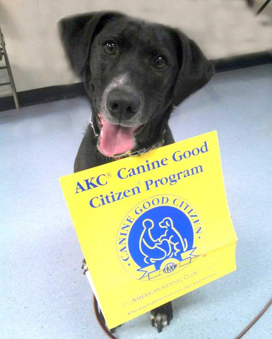 Good Citizen Dog Test