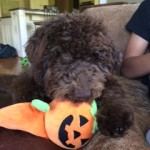 cody and his pumpkin toy
