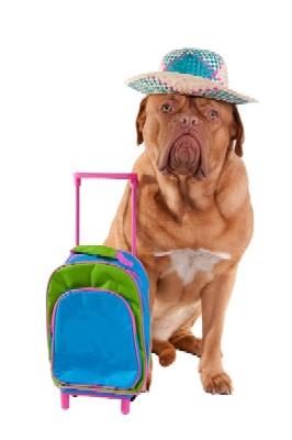 Dog Boarding Preparations!