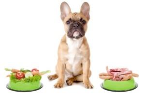 choosing a pet food