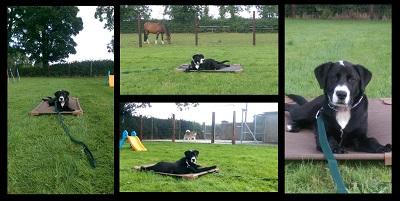 Dog Training Success